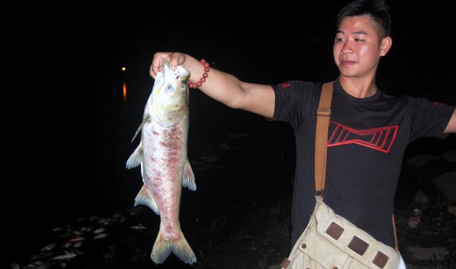 Nguyên nhân cá chết hàng loạt có thể là vì thiếu oxy
