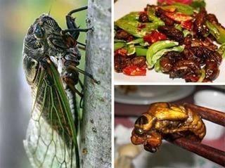 Khoa học Mỹ vừa chứng minh: Đây là loại côn trùng ghê rợn nhất nhưng chứa nhiều dinh dưỡng, tốt cho sức khỏe