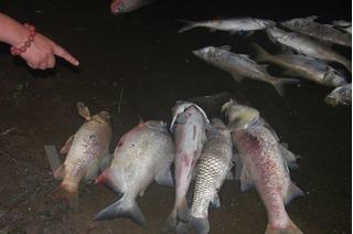Cá chết ở hồ Linh Đàm: Xét nghiệm mẫu nước tìm nguyên nhân