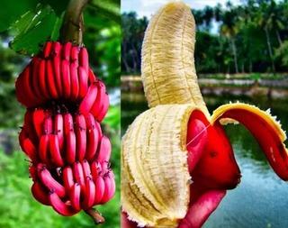 Khám phá 10 loại trái cây độc - đắt nhất thế giới