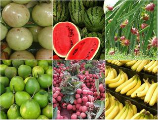 Top 6 loại quả thuần Việt 100%, không bao giờ nhập khẩu từ Trung Quốc