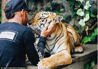 Lewis Hamilton gây sốc khi đùa với hổ