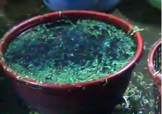 Đồng Nai: Phát hiện rau muống bào ngâm hóa chất chợ Kim Biên