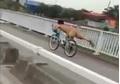 Clip thanh niên làm xiếc, uốn dẻo khi đang đi xe đạp