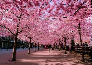 Những con đường hoa, lá lãng mạn trên thế giới