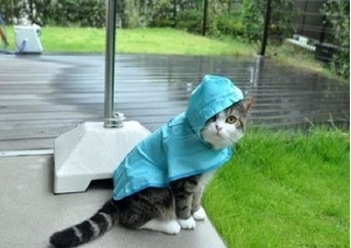 Những chú mèo đánh cắp trái tim của hàng triệu cư dân mạng