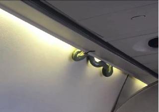 Phát hoảng khi nhìn thấy rắn bò trên máy bay