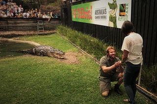 Úc: Vừa cho cá sấu khổng lồ ăn, vừa cầu hôn bạn gái