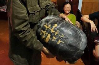 """Người dân Nghệ An quyết không bán cụ rùa """"khủng"""""""