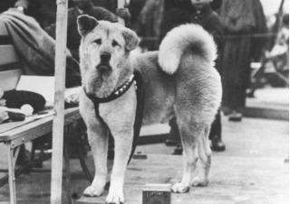 Ngay cả trái tim sắt đá nhất cũng lay động vì những chú chó này