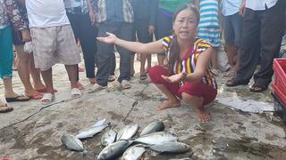Cá lại chết hàng loạt ở Huế, ngư dân trào nước mắt lo mất Tết