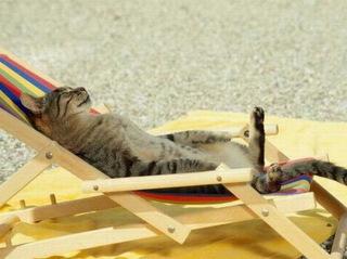 Mèo lười nằm ườn tắm nắng và sự thật ít ai ngờ