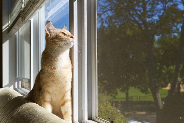mèo phơi nắng
