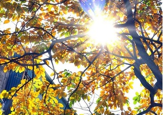 Dự báo thời tiết ngày mai 12/11: Hà Nội hửng nắng