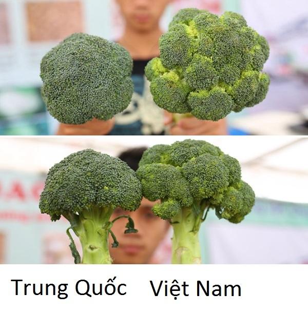 phân biệt rau củ Trung QUốc 7