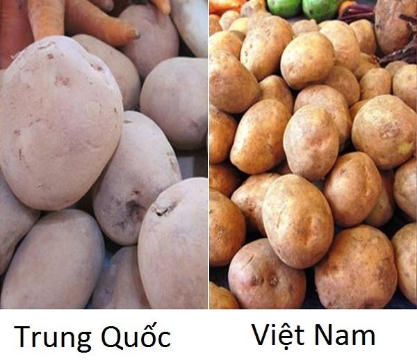 phân biệt rau củ Trung QUốc 8