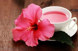 Bài thuốc kìm hãm sự phát triển của tế bào ung thư bằng hoa dâm bụt