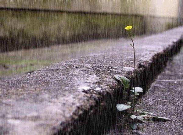 Dự báo thời tiết ngày mai, một số nơi có mưa rải rác nhưng không đáng kể