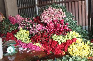 Cung hạn chế, rau và hoa Đà Lạt đội giá