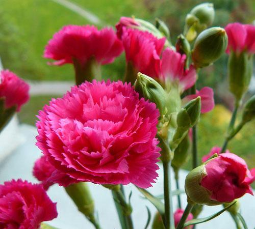Mách mẹ 5 loại hoa cho con tặng thầy cô giáo trong ngày 20/11