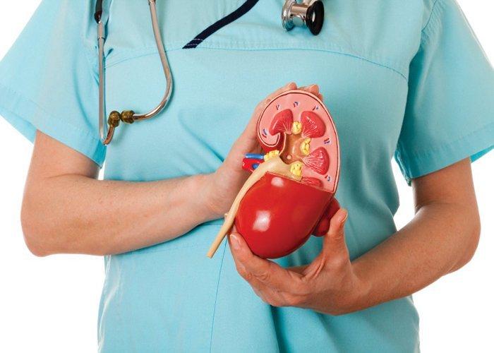 Người bệnh chỉ nên điều trị sỏi thận bằng thuốc nam theo chỉ dẫn của bác sĩ