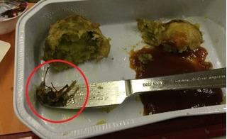 Hành khách ăn chay điếng người vì xơi nhầm xác gián trong suất ăn máy bay