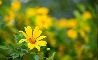 Lên Tây Bắc tận hưởng vẻ đẹp của 3 loài hoa này