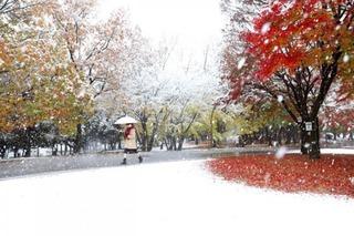 Tokyo trắng xóa đến nao lòng trong trận tuyết bất thường sau 54 năm