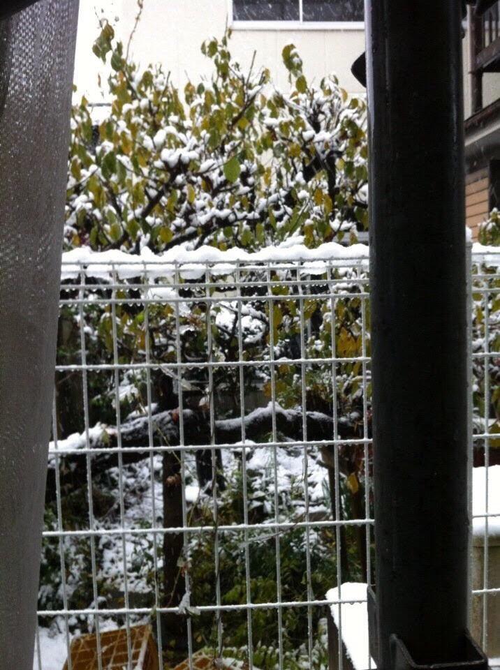 Cây cối cũng được phủ một màu trắng xóa của tuyết đầu mùa. Ảnh: Hồng Nhung