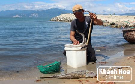 cá chết hàng loạt người dân lo lắng