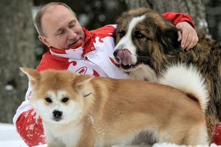 Tìm hiểu giống chó quý Tổng thống Nga Putin từ chối nhận của Nhật Bản
