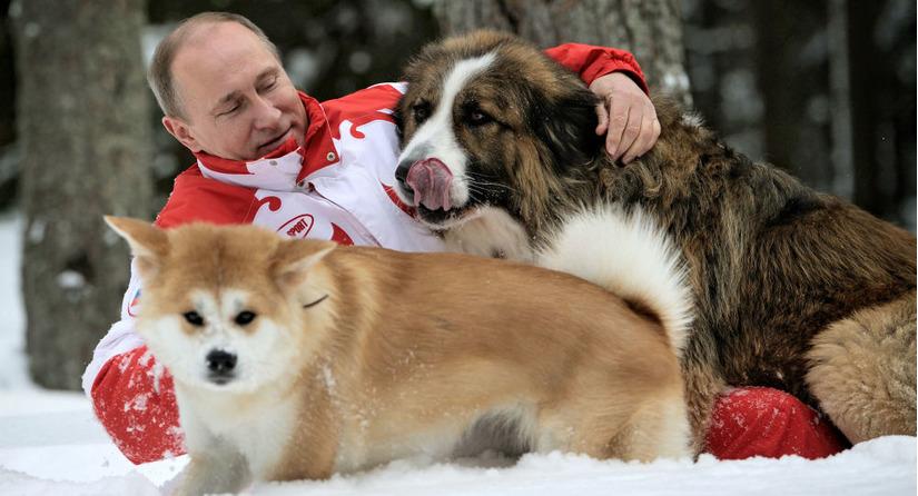 Tổng thống Putin chưa sẵn sàng nhận thêm chó từ phía Nhật