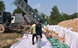 Tiêu hủy hơn 600 tấn hải sản có hàm lượng Cadimi vượt ngưỡng