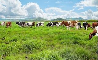 Vinamilk ra mắt sản phẩm sữa tươi 100% Organic đầu tiên ở Việt Nam