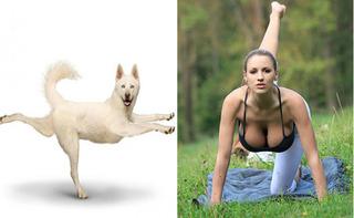 15 khoảnh khắc động vật tập Yoga khiến ai xem cũng phải phì cười