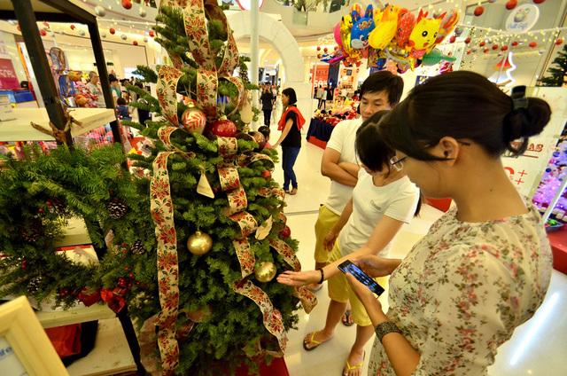 Người dân thích thú xem cây thông Noel thật ít xuất hiện ở nước nhiệt đới như Việt Nam. Ảnh: Dân Trí