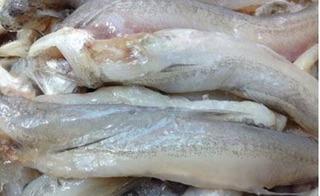 Cận Tết, bắt giữ hơn 1,5 tấn cá sò và cá khoai nhập lậu