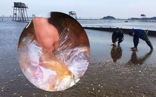 Vụ ngao chết hàng loạt ở Thanh Hóa: Do hóa chất có độc tính gấp 1.500 lần?