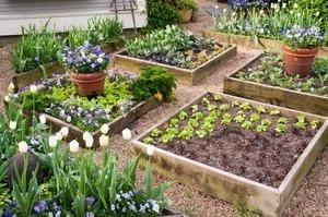 Chăm sóc hoa cần chú ý những gì?
