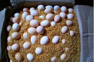 Các cách bảo quản trứng lâu hơn cho các bà nội trợ
