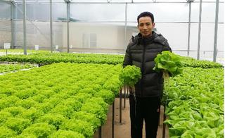 Thạc sỹ tài chính về rừng trồng rau, thu tiền tỷ mỗi tháng