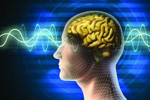 Nội nang đường giao thông huyết mạch của thần kinh