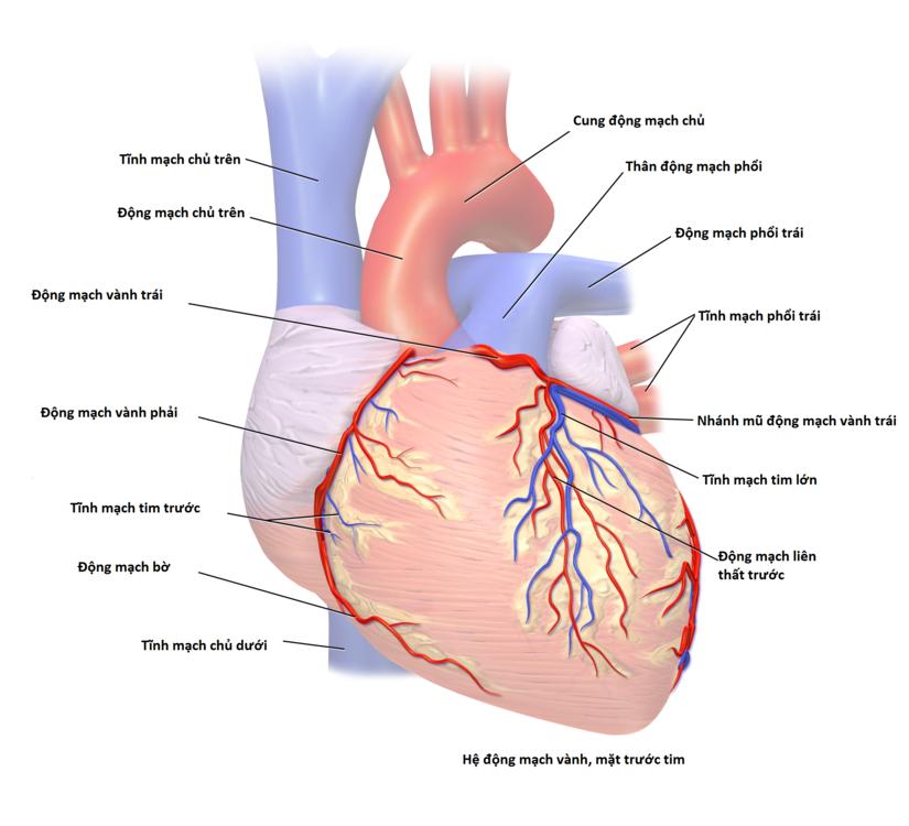 Bệnh động mạch vành tim