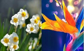3 loài hoa chơi Tết tưởng sang chảnh nhưng lại cực độc cho trẻ nhỏ, mẹ chớ coi thường!