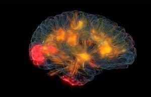 Tuyến sinh mệnh vận chuyển chất dinh dưỡng - huyết quản chủ yếu của não người