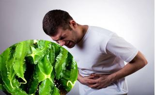 Trị dứt điểm bệnh đau dạ dày kinh niên sau 2 tuần nhờ quả đậu rồng cực đơn giản