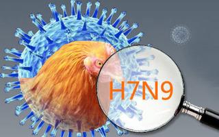 Bùng phát nỗi lo cúm gia cầm H7N9 xâm nhập từ Trung Quốc vào Việt Nam