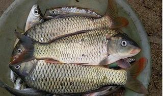 Thanh Hóa: Nguyên nhân thực sự khiến cá chết hàng loạt trên sông Âm