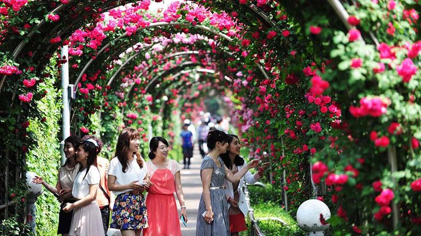 Lễ hội hoa hồng Bulgaria Hà Nội 1