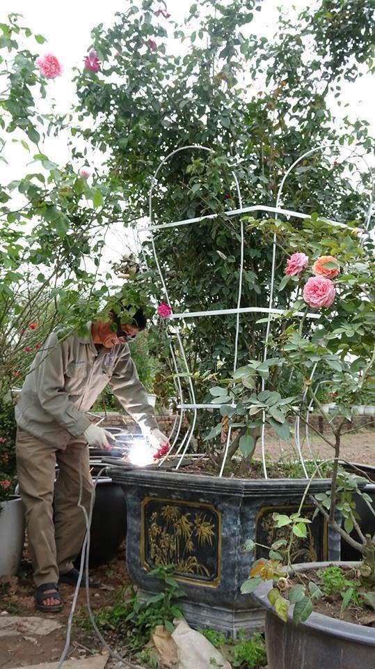 Lễ hội hoa hồng Bulgaria 4
